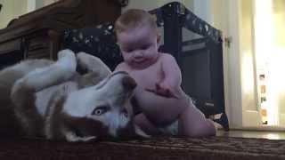Dziecko przyczołgało się do Huskiego aby się przywitać. Wtedy tata uchwycił piękną reakcję psa!