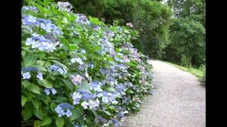 Agatha Christie's Greenway A Home In Devon.wmv Video