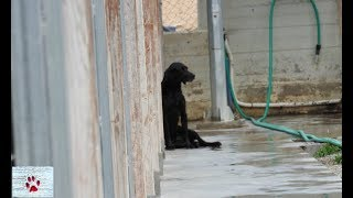 Death row for the Greek stray dogs -how things work here by The Orphan Pet