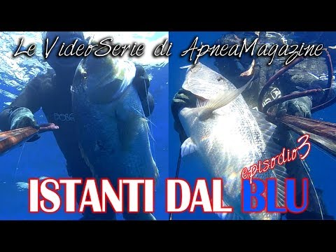 Pescasub all'Agguato: Dentici in Bassofondo - Apnea Magazine