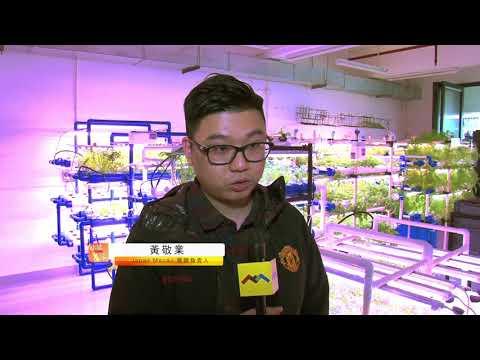 小城大事-魚菜共生-餐廳Japas Macau