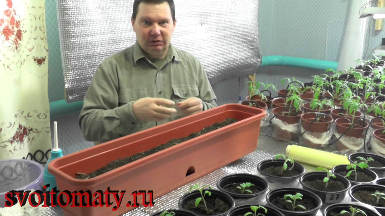 Смотреть онлайн:  Подготавливаем семена и сеем капусту