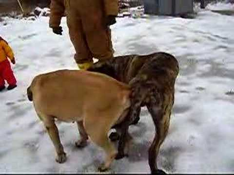 YouTube Mating Dog http://crawler.dipity.com/timetube/YouTube_Dog_Mating/#!