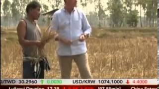 Thailand farmer suicides