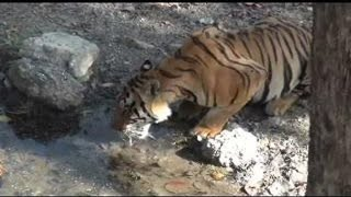 Kanha India  city images : Water crisis in india - Wild Life | Kanha National Park | Madhya Pradesh | Kanha Tiger Reserve