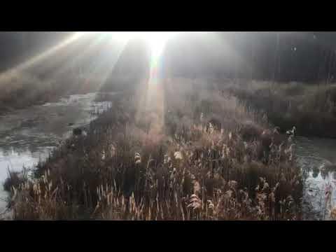 У Коростенському районі припинено нелегальне видобування бурштину