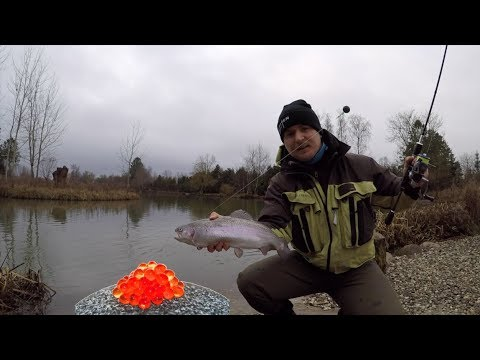 Sådan kan du fange mange fisk i put and take om vinteren!