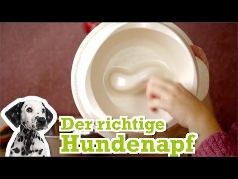 Hunde: Hundenäpfe im Vergleich - Der passende Hundenapf für deinen Hund
