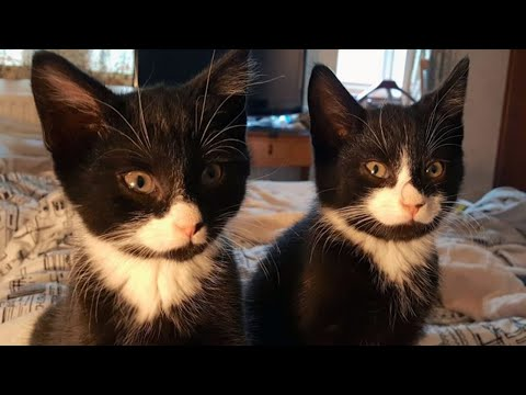 These Kittens Were Rescued, But A Few Days Later, The Rescuers Got A Surprising Call