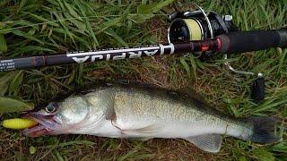 Ловля судака и берша спиннингом. Fishing For Walleye And Spinning Bersha