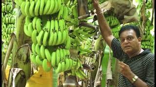 Banana Farmer (Jaivik)