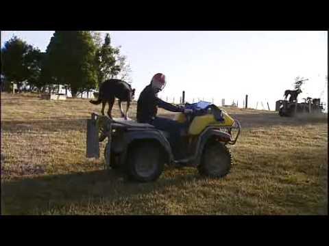 Blooper: Weather presenter makes dog's breakfast of live cross