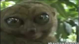 Beste Lustige Tiere Videos 2011
