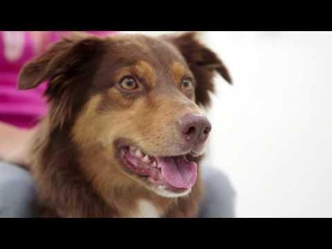 Vetmeduni Vienna: Clever Dog Lab – deutsch