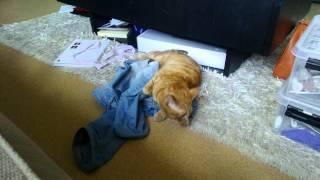 Libra tycker om byxorna jag hade i stallet