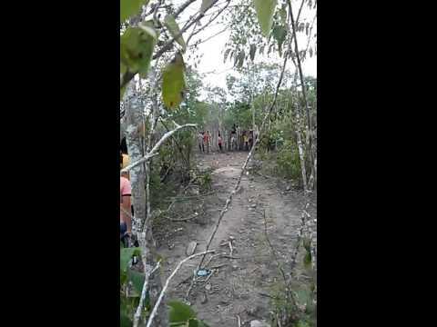 Pega de boi no mato em Tacaimbo pe(1)