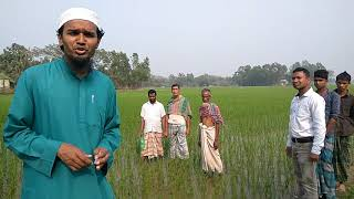AWD Technology for rice cultivation