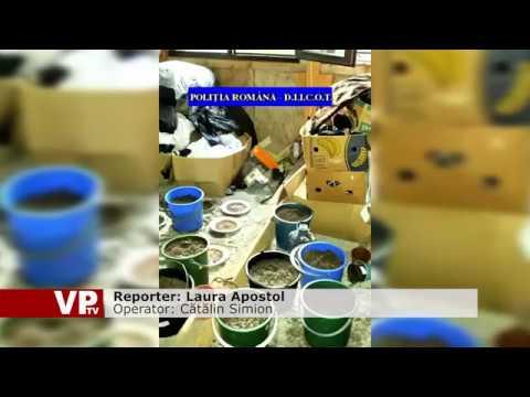 Rețea de trafic de droguri destructurată
