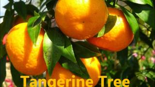 Vocabulary About Parts Of Different Trees.wmv