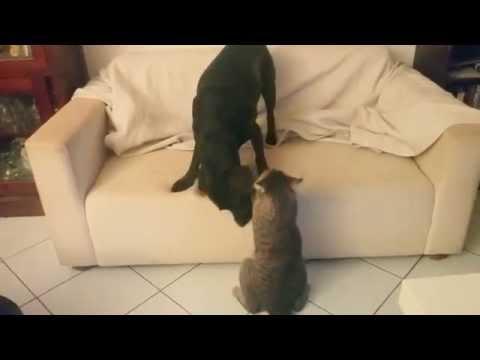 Dog vs cat friendly fight