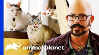 Jackson Galaxy's Top Tips For Cat Owners | My Cat From Hell by Animal Planet