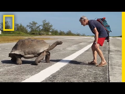 Explorer Interrupts Mating Tortoises Slowest Chase Ever