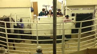 Emory (TX) United States  City pictures : Texas Cattle Auction