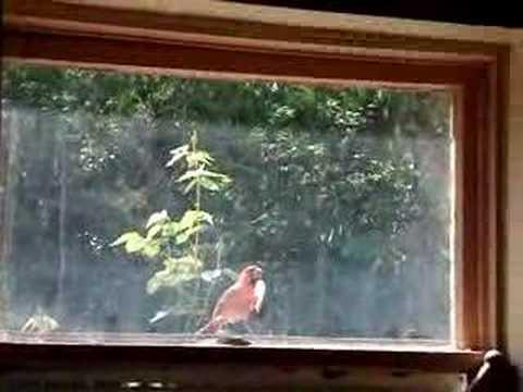 Uccello contro finestra