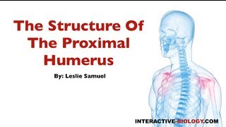 076 The Structure Of The Proximal Humerus