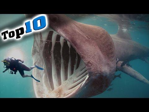 史上最危險的10大生物?? 你看過幾種??