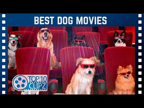 Top 10 Best Dog Movies for Dog Lovers