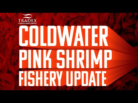 3MMI - Pink Shrimp Update - 38 Millions lbs Forecasted, Inventory Surplus