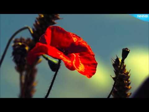 Превью - Для Чувст - Релакс (Захватывающее путешествие в мир природы и звука) (видео)