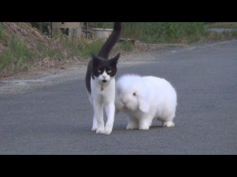 這只貓咪和兔子弟弟後每天都和牠外出散步,當弟弟停在一邊吃草…貓咪的反應萌翻萬人心啊!