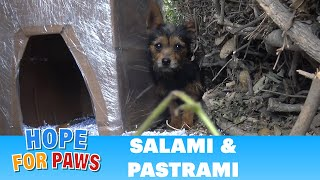 Salami and Pastrami lived on the cold streets until Hope For Paws got the call for help by Hope For Paws