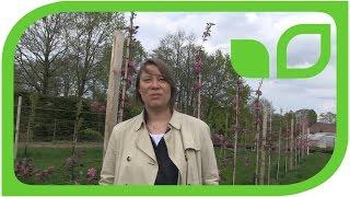 Der Apfel und die Kunst - Interview mir Antje Majewski