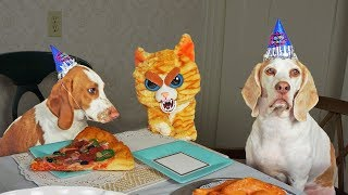 Evil Cat Ruins Dog Party! Funny Dogs Maymo, Penny & Potpie by Maymo