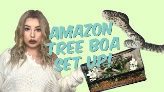 SETTING UP MY AMAZON TREE BOA ENCLOSURE! ( mite updates! ) by Emma Lynne Sampson