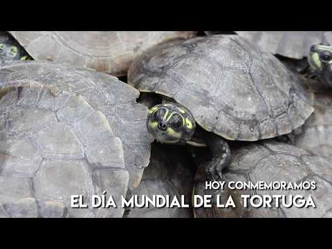 Día mundial de la tortuga
