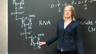 Explanation Of 5' And 3', C Terminus, And N Terminus | MIT 7.01SC Fundamentals Of Biology
