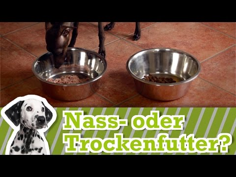 Hunde: Trockenfutter oder Nassfutter für Hunde - Hundee ...
