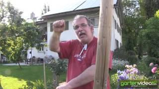 #1193 Wie pflanze ich eine Hecke mit Säulenbäumen - Apfelsäulenbäume Malini