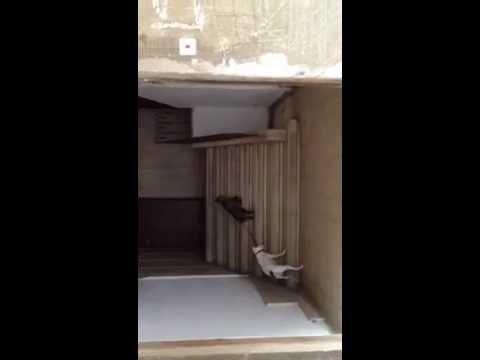Katt följer hund hem