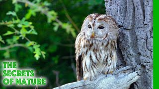 Video Viennas Forests, Jewels of Green - The Secrets of Nature MP3, 3GP, MP4, WEBM, AVI, FLV Agustus 2019