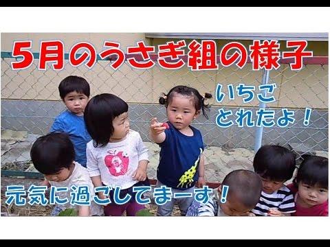 八幡保育園(福井市)5月のうさぎ組(1歳児)の様子。山奥公園であそんだり、いちごをとって食べたりして楽しんでます。