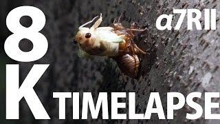8K TimeLapse SONY a7RII ILCE−7RM2 ソニー「α7R II」で8Kタイムラプス撮ってみた