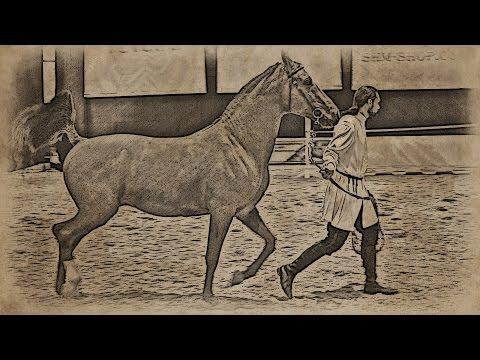 Донская лошадь на выставке «Эквирос'2016»