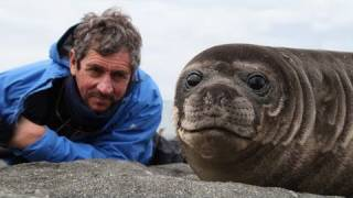 Man Sits Closely To A Baby Seal – will melt your heart