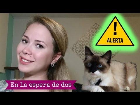 ¿Mi gato es peligroso para mi embarazo?- En la espera de dos Vlog #4