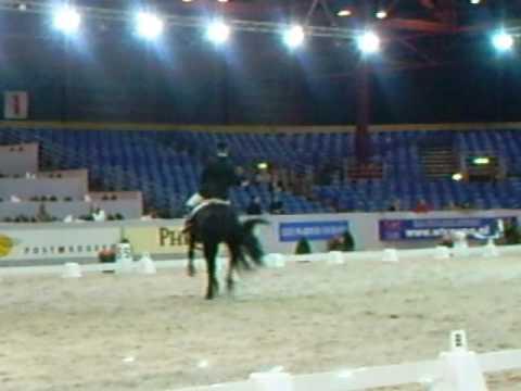 Concorso Stalloni finale in Leeuwarden